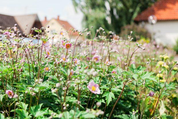 blommor solängen hammenhög
