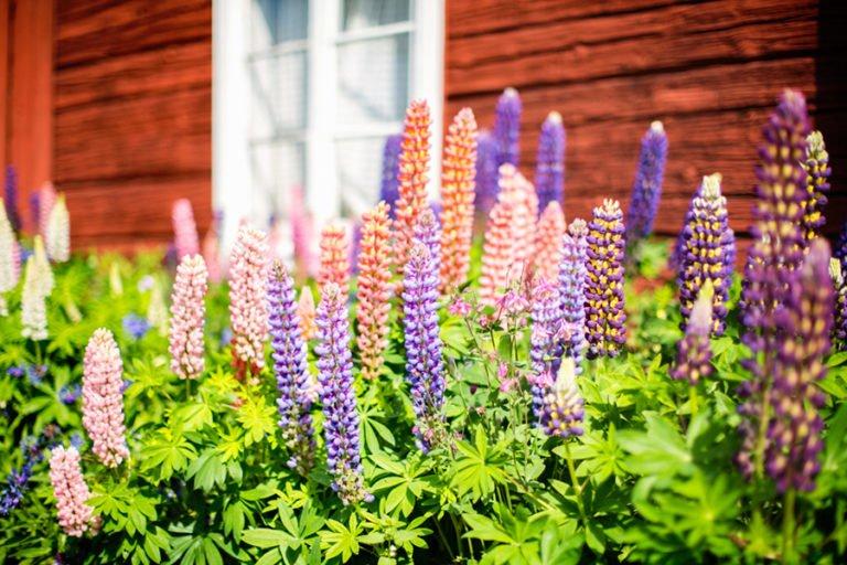 blommor framför hus